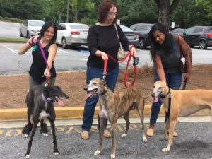 Weekend of Pet Therapy with Greyhounds
